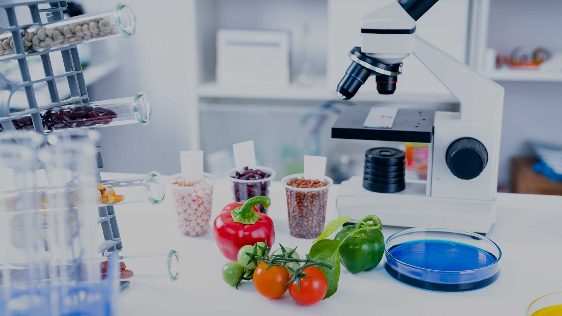 Plant-based food innovation for a more sustainable industry